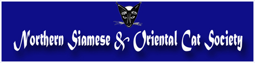 siamese and oriental cat club